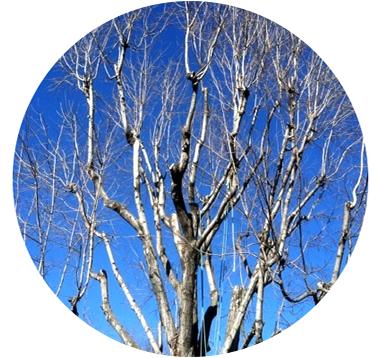 Tree Healthcare